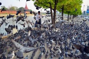 Trošku holuby