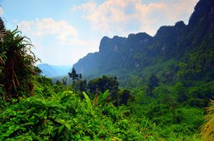 Cesta džunglou