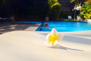Typická kvetinka rastie všade na Bali. Radi si ňou zdobia vlasy.