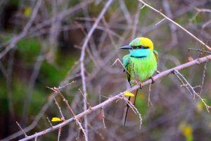 Vtáčik (zabudla som, ako sa volal)