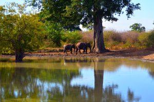 Máme milión fotiek slonóv, tak sa musíme aspoň s pár podeliť.
