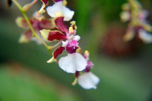 Pavilón orchideí.