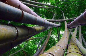 Bambusov nie je nikdy dosť ;)