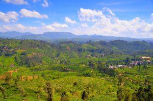 Sri Lanka je neskutočne zelená.