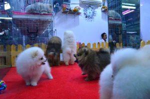 V Bangkoku sme navštívili sobotné trhy. U týchto psíkov neviem, kde je predok a kde zadok.