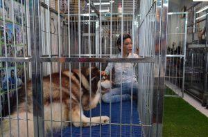 A videla som aj najväčšieho psa môjho života.