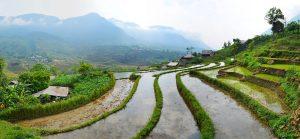 Rýžové polia v Sape