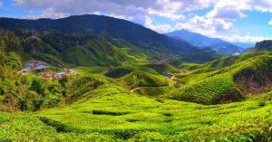 Čajové plantáže v Cameron Highlands.
